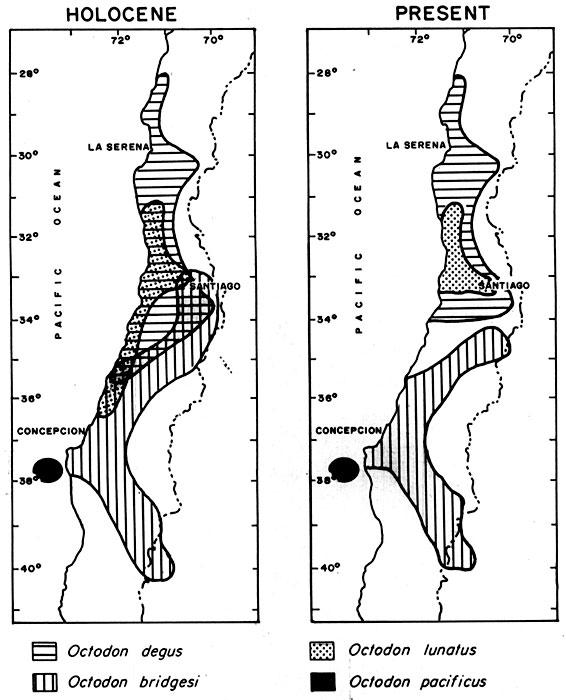 Répartition géographique des différentes espèces d'octodons.