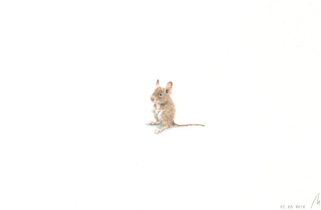 Degus illustration  Irene Malakhova - Tiny worlds living